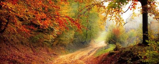 Gestärkt durch den Herbst – wie die Natur uns unterstützen kann